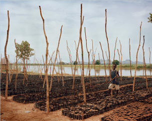 A new megafarm in Western Ethiopia, for palm-oil trees, sugar cane, rice and sesame.  All through the Rift Valley region, there are new fence posts signifying the recent rush for Ethiopian land. In the old days, farmers rarely bothered with such formal lines of demarcation, but now the country�s earth is in demand. One fence stretched on for a mile or more, very possibly belonging to Sheik Mohammed Al Amoudi, a Saudi Arabia-based oil-and-construction billionaire who was born in Ethiopia and maintains a close relationship with the Ethiopian Prime Minister Meles Zenawi�s autocratic regime.  Photo: Simon Norfolk/New York Times