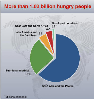 World Food Crisis (DEATH): World Hunger Facts 2009