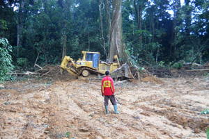Bulldozer knocking down a tree. Muddy cleared area in foreground. Clearing a rainforest in Cameroon for palm oil plantation. Opponents say the costs outweigh benefits.  Photo: Courtesy David Hoyle/WWF