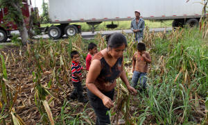 Jos� Antonio Alvarado and his family harvested corn in November on a highway median in Guatemala, where farmers struggle to find land. Richard Perry/The New York Times