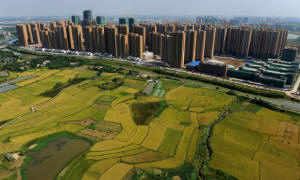 Building in the city of Hefei next to surrounding fields � as China�s urbanisation continues at breakneck speed, will its agrarian resources be hit? Photograph: AFP/Getty Image