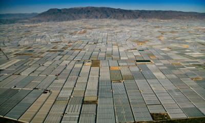 Greenhouses grow greenhouses. As far as the eye can see, greenhouses cover the landscape in Almeria, Spain.