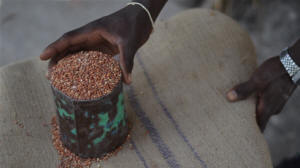 Small can of grain to be purchased.  Photo: � Jason Patinkin/IRIN
