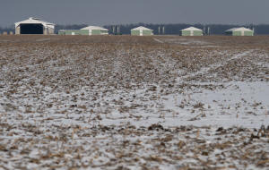 n rural Ohio, teens from Guatemala are found debeaking chickens at an egg farm while living in �horrible� conditions, the government says. Photo: �  Ty Wright/The Washington Post