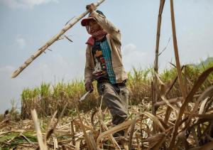 cambodia_sugar_worker