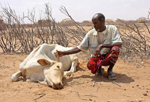 famine_herdsman_dead_cow