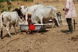 nigeria_cattle_rustling