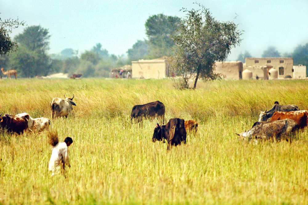 pakistan_farmland_lease_foreign_investors
