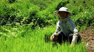 woman_farmer