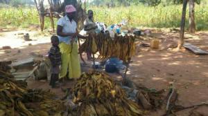 zimbabwe_evicted_farm_family