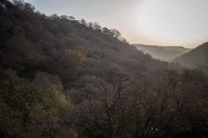 india_sacred_forest
