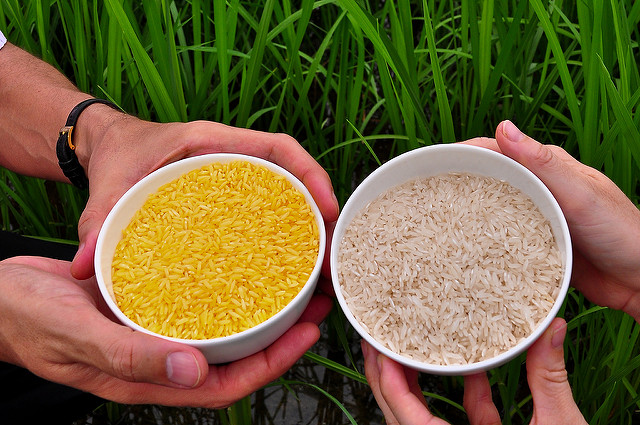 Golden Rice grain compared to white rice grain. Photo: International Rice Research Institute