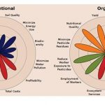 The flower petals and the labels represent different sustainability metrics that compare organic farming with conventional farming. They illustrate that organic systems can better balance the four areas of sustainability: production (orange), environment (blue), economics (red) and social wellbeing (green). Illustration: John Reganold and Jonathan Wachter/The Guardian