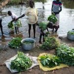 South Sudan, 2016: Girls wash foraged wild greens in a river's unsafe waters. Photo: © UNICEF/UN25843/Everett