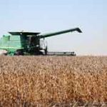 Machine harvesting soybeans. Photo: United Soybean Board