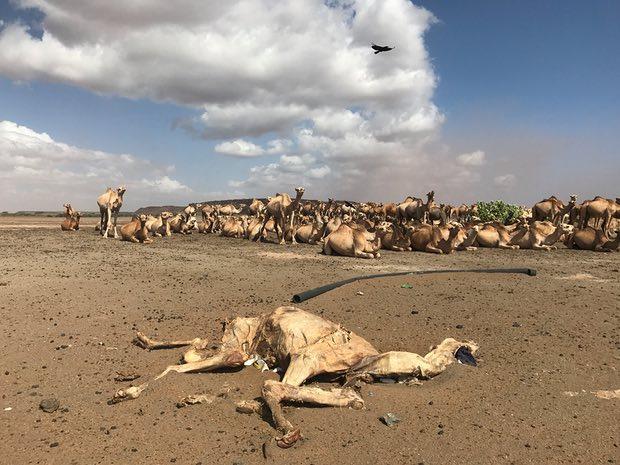 Ethiopia's Man-Made Famine