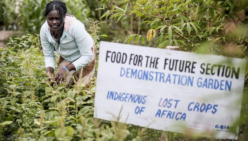 Gender gaps: Bane of Africa's agricultural R&D