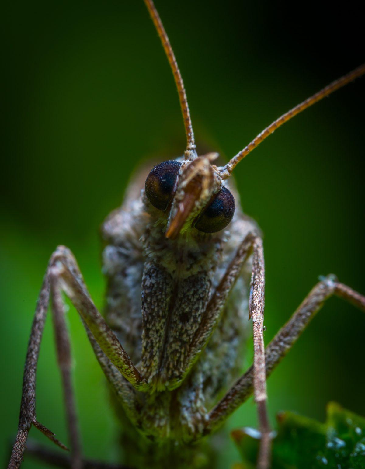 Desert Locust Plague in East Africa